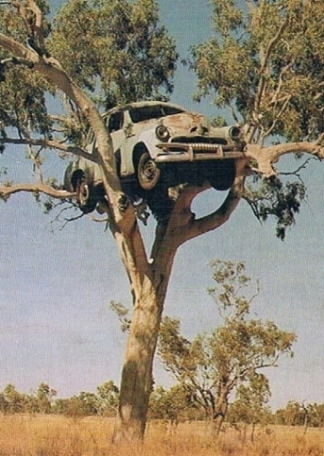 Holden Up the Gum Tree