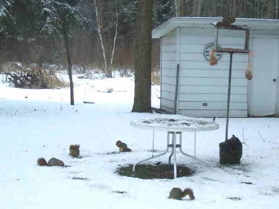 squirrels feeding