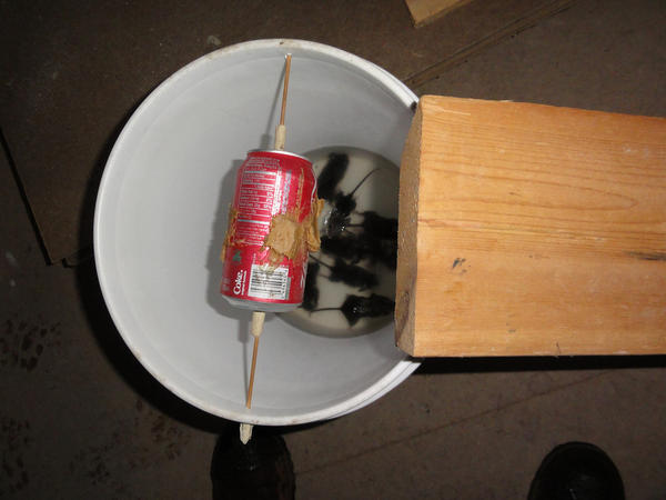 Mouse Bucket